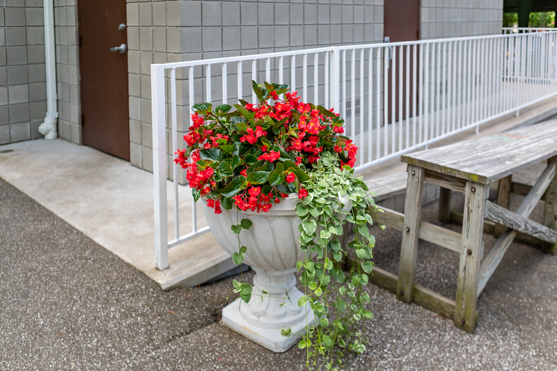 Waldameer Flowers July 23, 2019 040