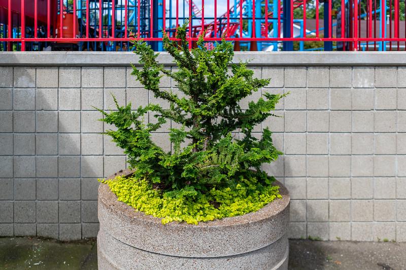 Waldameer Flowers July 23, 2019 036