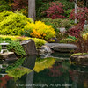 Fall Japanese Garden