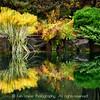 LIttle Autumn Pond