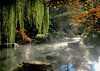 'Morning Garden Mist'