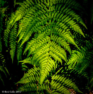 Fern Dell Summer