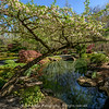 Apple Blossom Arc