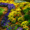 Curve of garden color