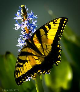 Monarch Breakfast