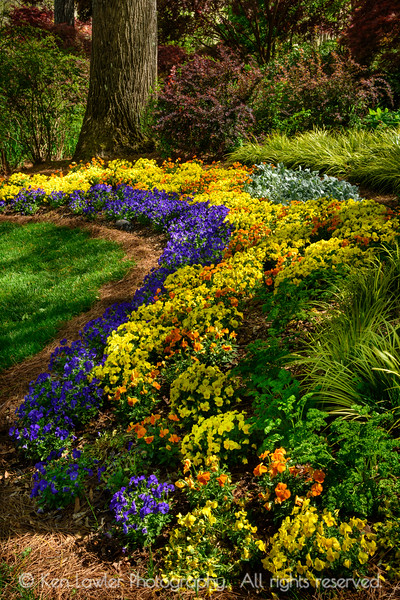 Curve of garden color with tree