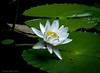 White Bloom #3