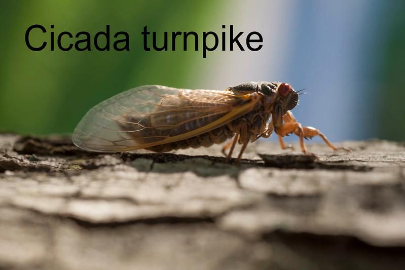 Cicada interstate with cicada sound