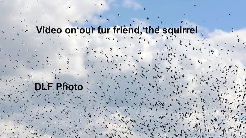 squirrelchasingfitonscreen
