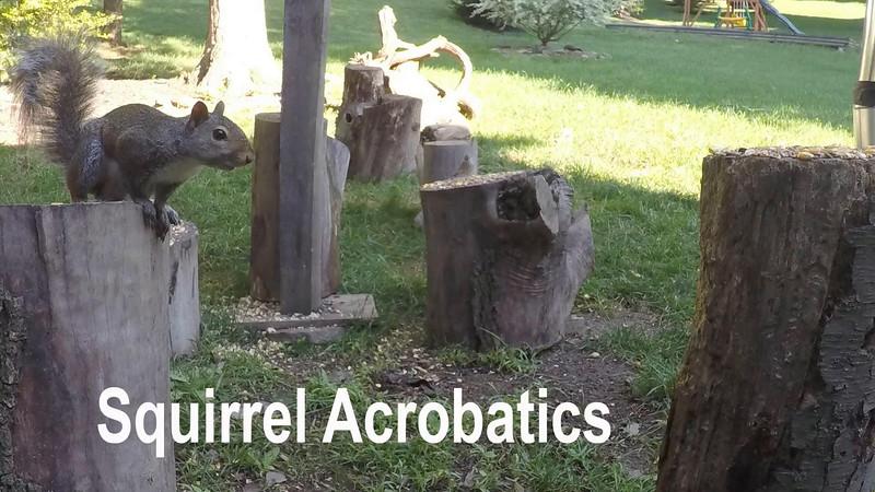 acrobaticsquirrels1
