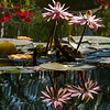 Flower Reflections - Mexico