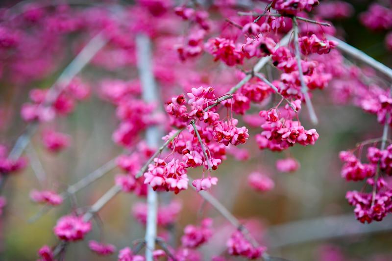 flower tree DSC_0406