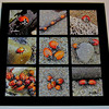 """Bug Beach Party Game Set"". Tic Tac Toe - glass game set featuring lady bugs at the beach. Includes glass ""X's"" and ""O's"" game pieces.<br /> Overall dims: 11.5"" X 11.5"" square."