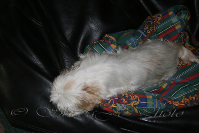 Shaiti... sleeping in the dog bed, on the bean bag.