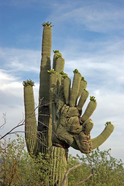 mutated cactus.