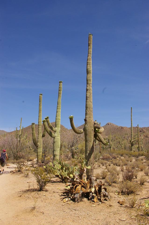 More cacti