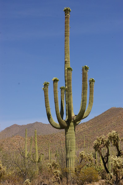 Interesting cactus formations