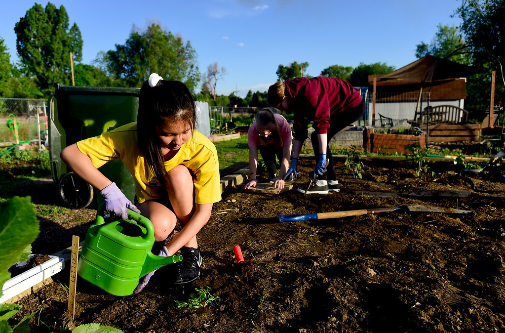 . Girl Scouts Bebe Lin, left, waters plants as Ashley Reichenberg, center, and Amber Reichenberg, right, place flagstones in a garden plot at the 11th Avenue Gardens in Longmont, Colorado on May 23, 2018. The girl scout troop plans to donate the vegetables from the garden to the OUR Center.  (Photo by Matthew Jonas/Staff Photographer)