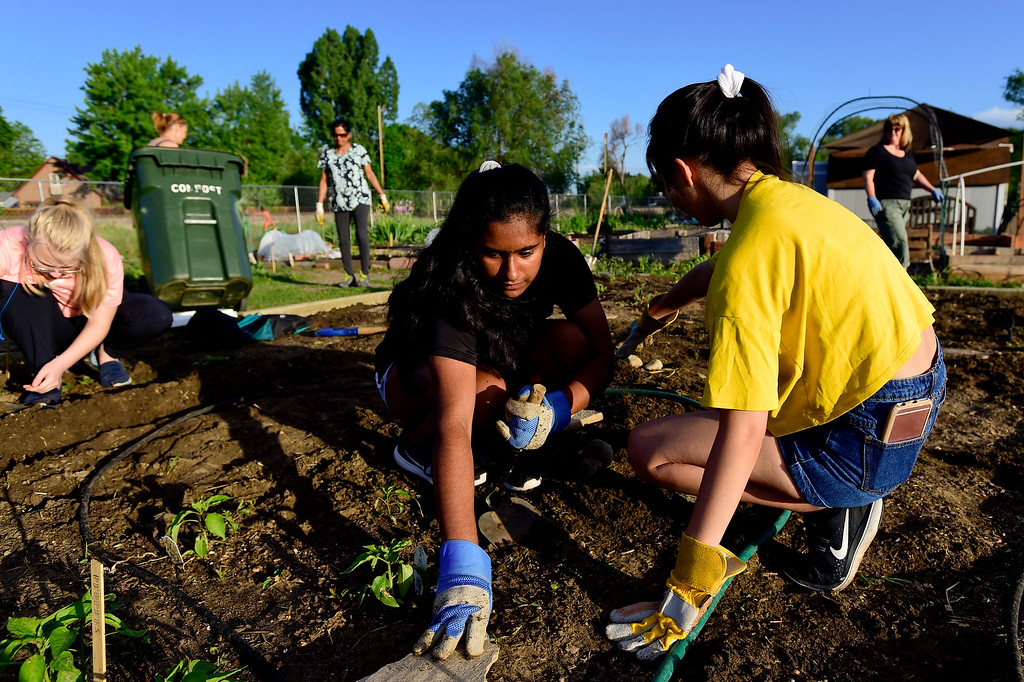 . Girl Scouts Bebe Lin, right, and Gayathri Budamgunta, left,  place flagstones in a garden plot at the 11th Avenue Gardens in Longmont, Colorado on May 23, 2018. The girl scout troop plans to donate the vegetables from the garden to the OUR Center.  (Photo by Matthew Jonas/Staff Photographer)