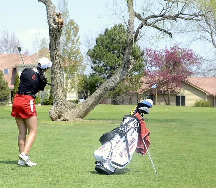 Loveland's Natalee Hall pitches her shot perfectly between the branches of the tree that protect the front of the 10th green at the Olde Course in Loveland. Hall shot a personal-best 81 to place in the top five and help the Indians win the Northern Conference league match on Monday. (Mike Brohard/Loveland Reporter-Herald)
