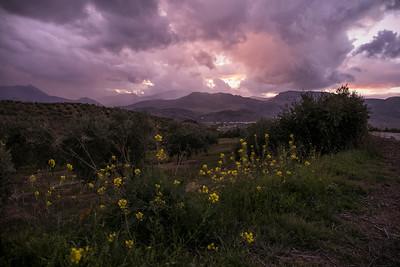 Andalucian Sun