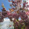 Monet's garden<br /> April 2017
