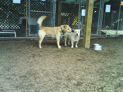 Dog yards at 1430 Folly. Timothy (left) and Chad, hanging out