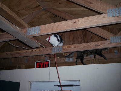 The ceiling beams were not off limits to the kitties in our two large cat rooms.
