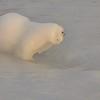 Plage d'Amphion - Un ours est caché dans la photo