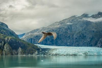 Glacier Bay-1-6