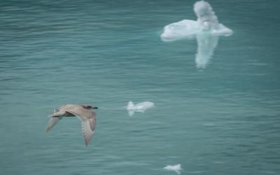 Glacier Bay-1-8
