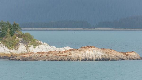 Glacier Bay-1-20