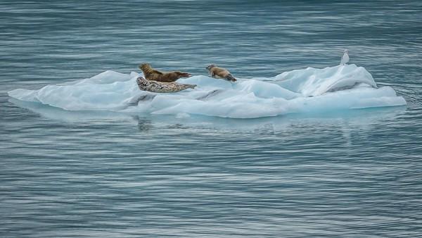 Glacier Bay-1-9