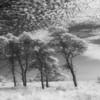 Nantucket moors, infrared