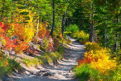 Trail to Iceburg Lake