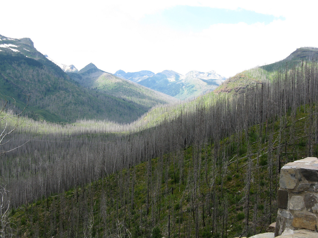 Looking up McDonald Creek valley, we see gray trees that have been ravaged by frequent fires within the park.
