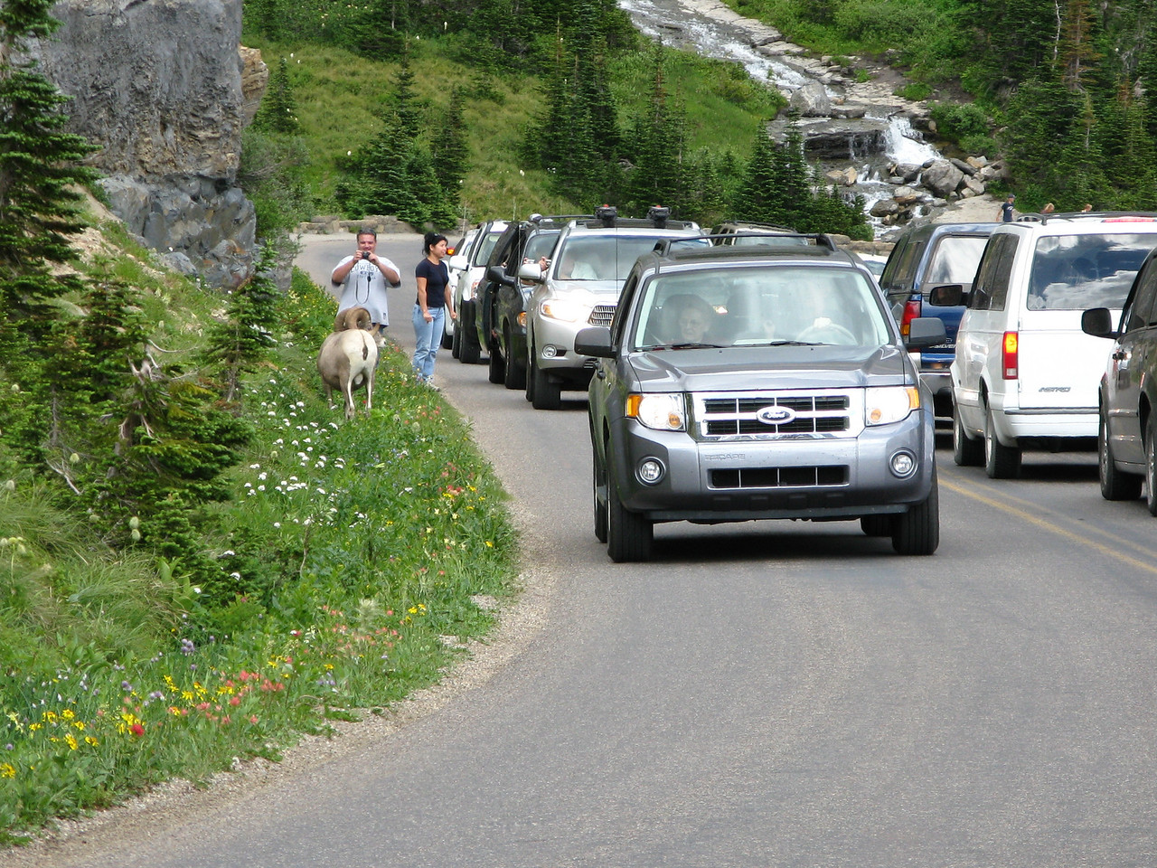 A ram on the side creates a jam of cars on the road.  Note the wildflowers along the road.