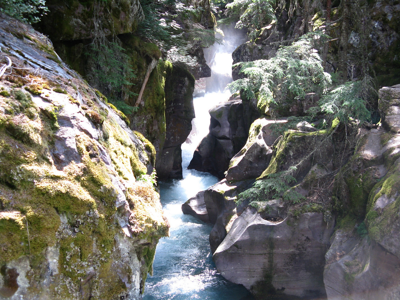 """At Avalanche Creek, we walked the """"Trail of the Cedars"""".  The 0.7 mile nature trail looped through a grove of old growth Red Cedars.  This is Avalanche Gorge, where the creek cascades down through a narrow channel in the rocks.  At about mile 16, Avalanche Creek has picnic areas and campgrounds as well."""