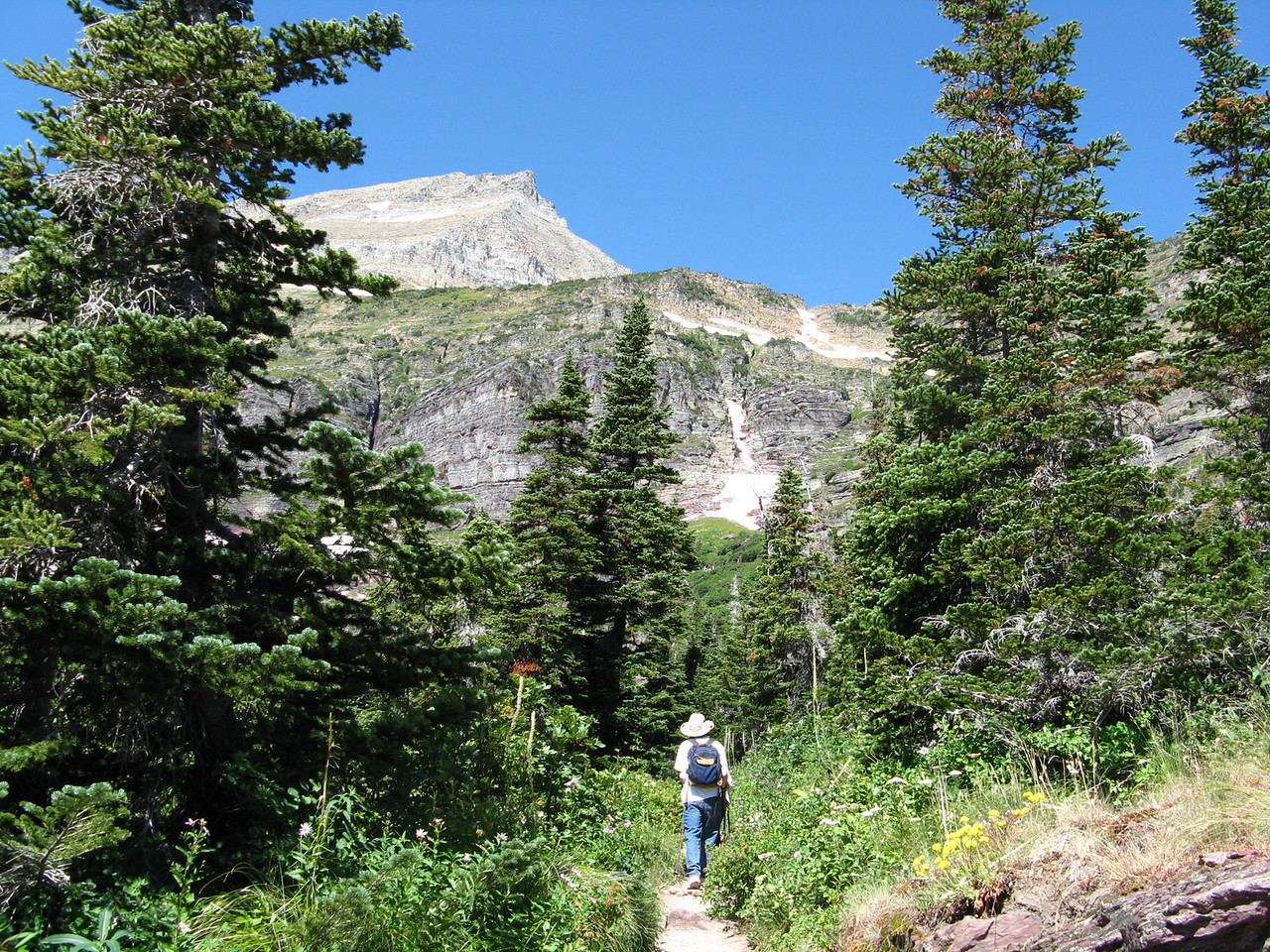 Much of the trail above Lake Josephine was on open hillside.  Here we are hiking in a grove of evergreens.  Kevin.