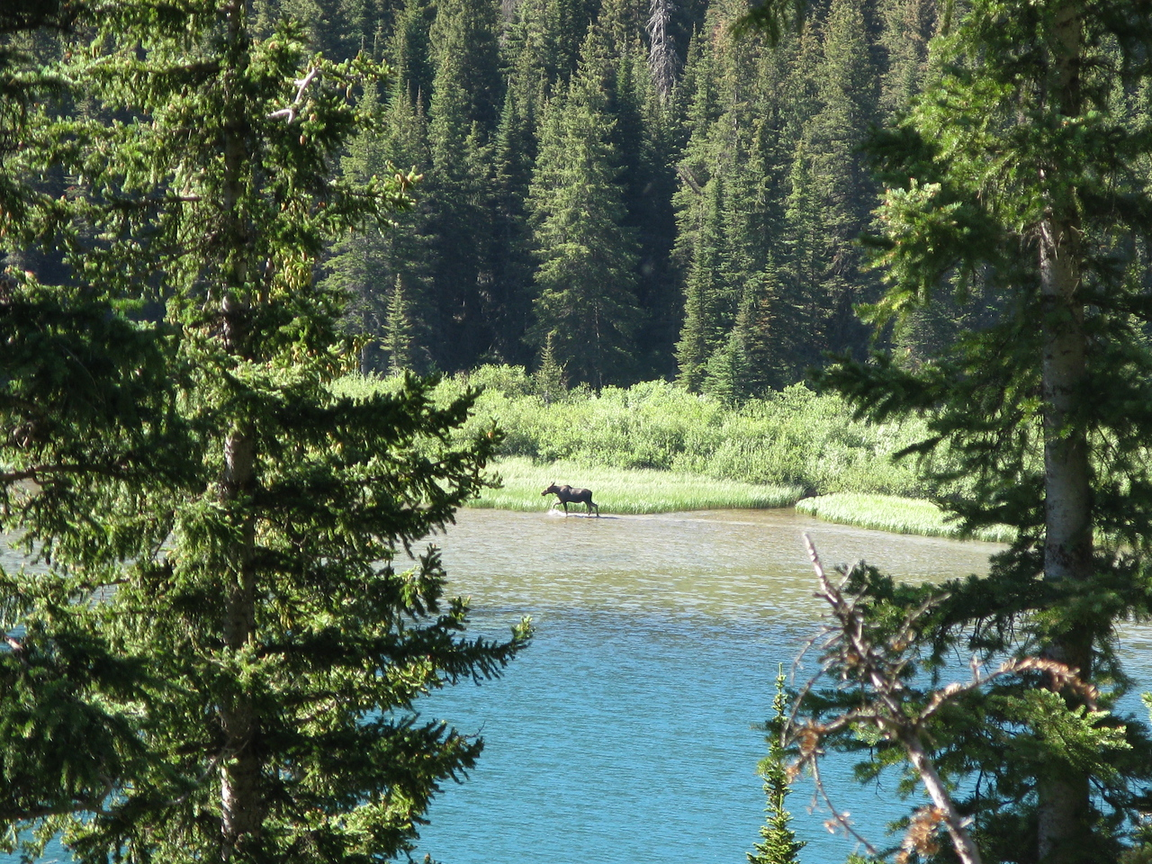 Near the head of Lake Josephine, we saw this moose at the edge of the water.
