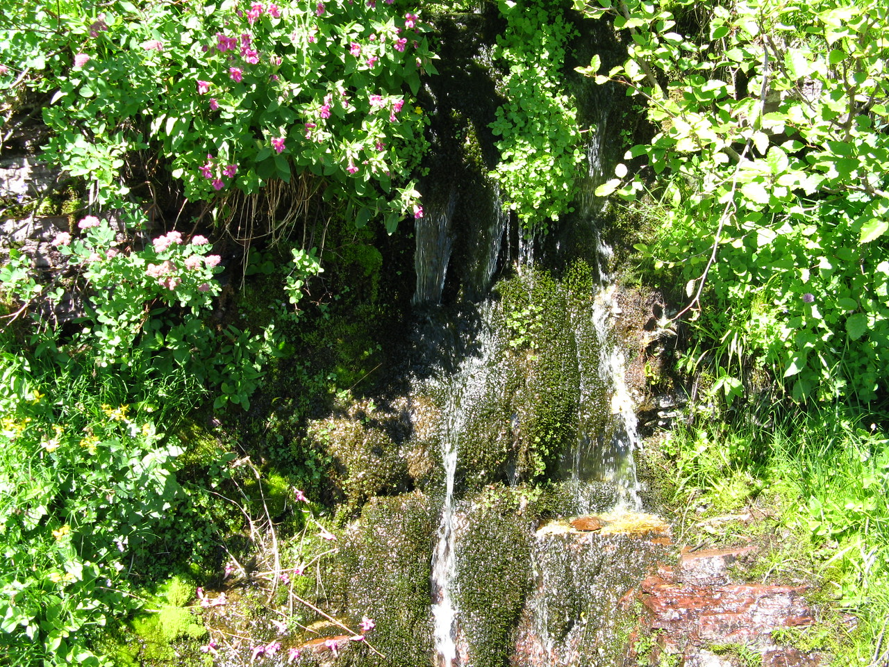 A water fall with blooming wildflowers along the trail.