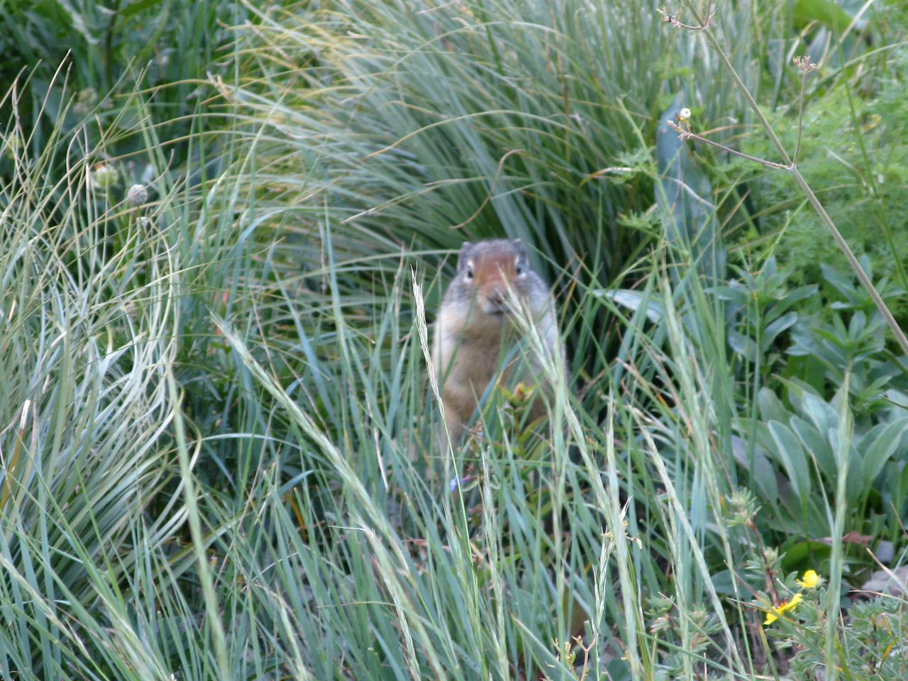 A ground squirrel checking us out.  Unlike the chipmunks at Rocky Mountain National Park, the ground squirrels were not begging us to feed them.  They scampered away from us.