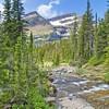 155 Piegan Pass Trail_1127