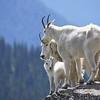 027 Mountain Goats_1394