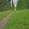 152 Piegan Pass Trail_1118