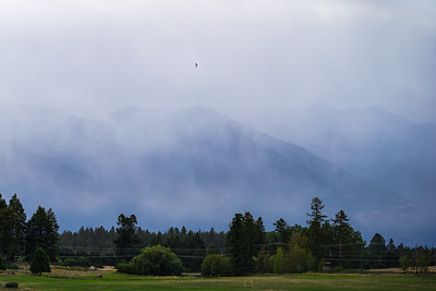 Bird flying over a misty morning in the mountains of Whitefish Montana