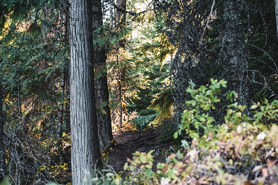 Shaded Forest Trail Through the Trees of Glacier National Park
