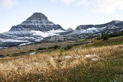 Reynolds Mountain from Hidden Lake Pass Grass Fields in Glacier National Park