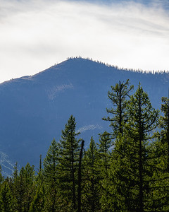 Sparse Top of a Mountain with Trees in Front inside of Glacier National Park
