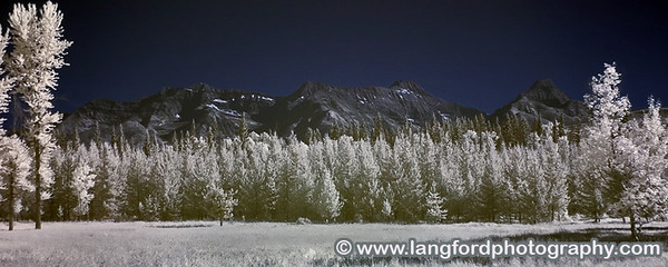 This infrared panorama shows a small meadow with the mountains of Central Glacier rising in the distance.